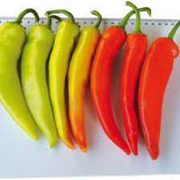 KS 65 F1 - семена перца острого 10 грамм, Kitano Seeds, фото 1