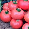 МЕЛМАН F1 - семена томата, Lark Seed