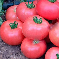 МЕЛМАН F1 - семена томата, Lark Seed, фото 1