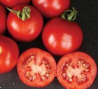 ШАСТА F1 - семена томата, Lark Seed, фото 1