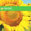 Семена подсолнечника НС Таурус Евро-Лайтнинг Clearfield Нови Сад (Сербия)