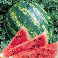 ЮММИ F1 - семена арбуза, Lark Seed