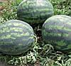 ЛЕДУС F1 - семена арбуза, Lark Seed