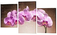 Модульная картина  395 Орхидея