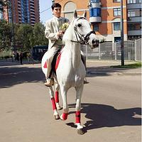 Выезд лошадей в город на Ваше мероприятие