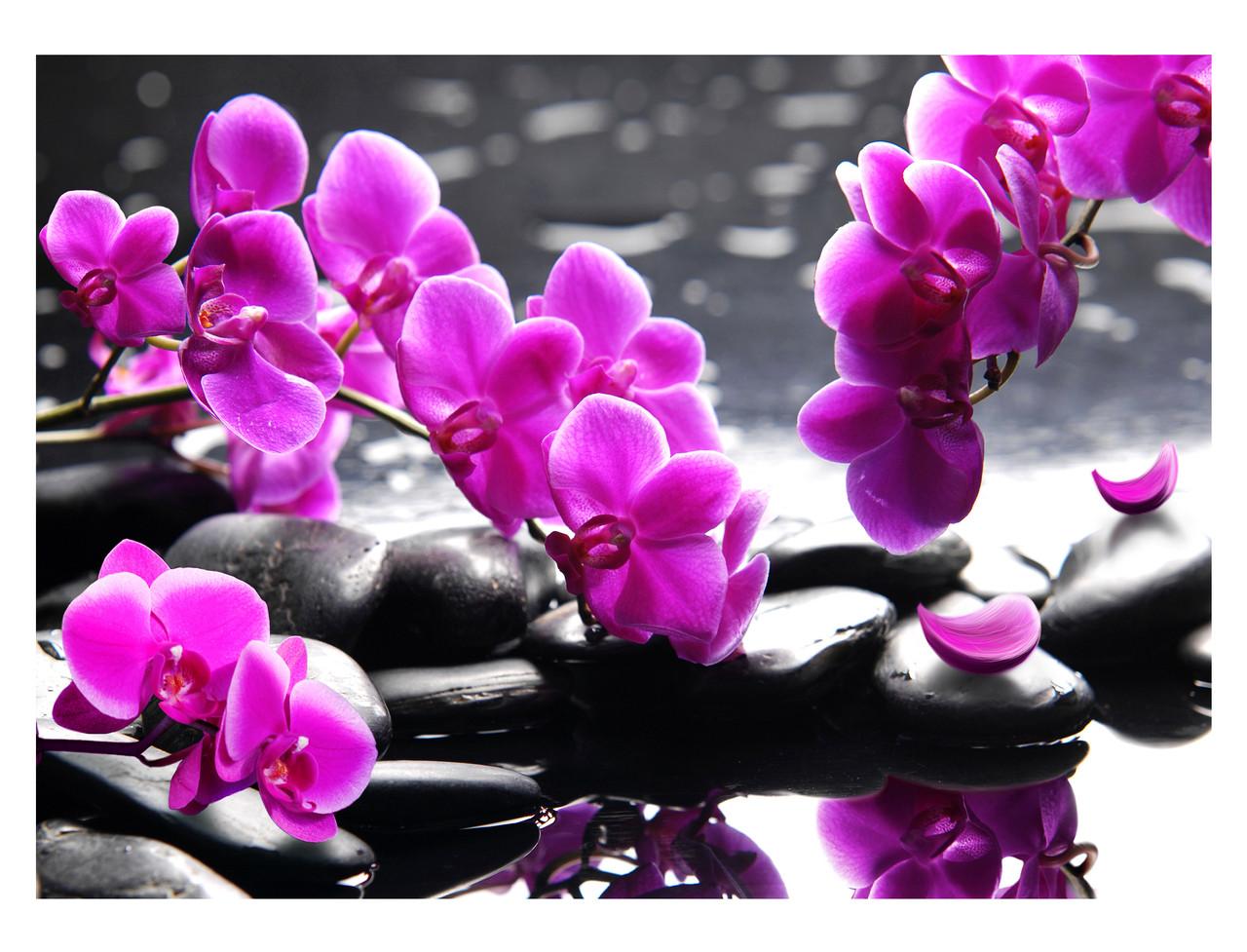 Бисером цветы фото орхидея