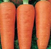 АФАЛОН F1 - семена моркови 50 000 семян, Moravoseed