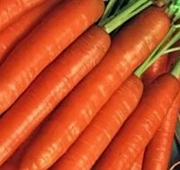 КНОТА F1 - семена моркови 50 000 семян, Moravoseed, фото 1