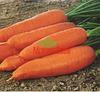 Корина семена моркови Нантес/Шантане