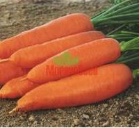 Корина семена моркови Нантес/Шантане, фото 1