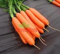 Дарина семена моркови Берликум , фото 1