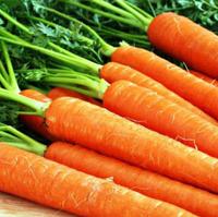 ХАРИЗМА F1 - семена моркови 50 000 семян, Moravoseed