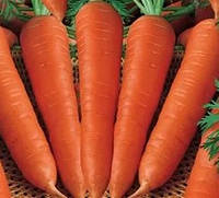 Цидера семена моркови Нантес
