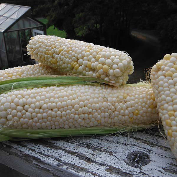 Кукуруза Страна джентельменов