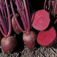 ДЕТРОЙТ ДАРК РЕД - насіння буряка столового, 5 кг, Lark Seed, фото 1