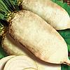 Центаур Поли семена белой кормовой свеклы Польша 1 кг