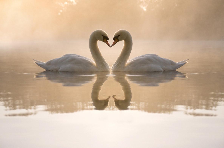 """Картина на стекле """"Пара лебедей в тумане"""""""