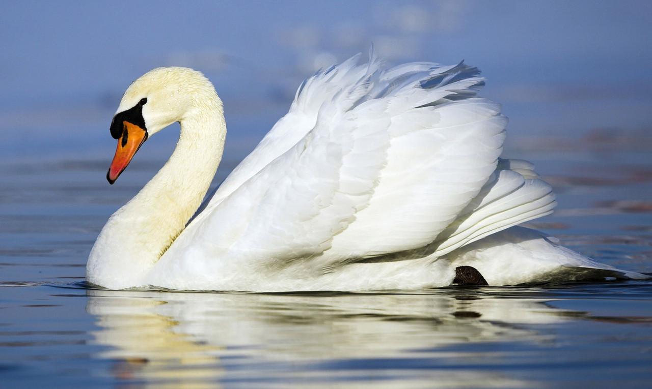 "Картина на стекле ""Белый лебедь"""