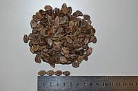 Семена арбуза среднераннего Чарльстон Грей, 1 кг, фото 1