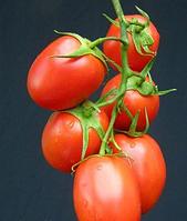 Семена томата Перфектпил