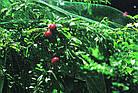 """Защитная сетка от птиц Польша """"Bradas"""" зеленая 4*5м, фото 4"""