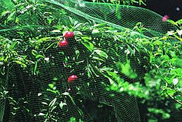 Защитная сетка от птиц зеленая 4*50м Bradas