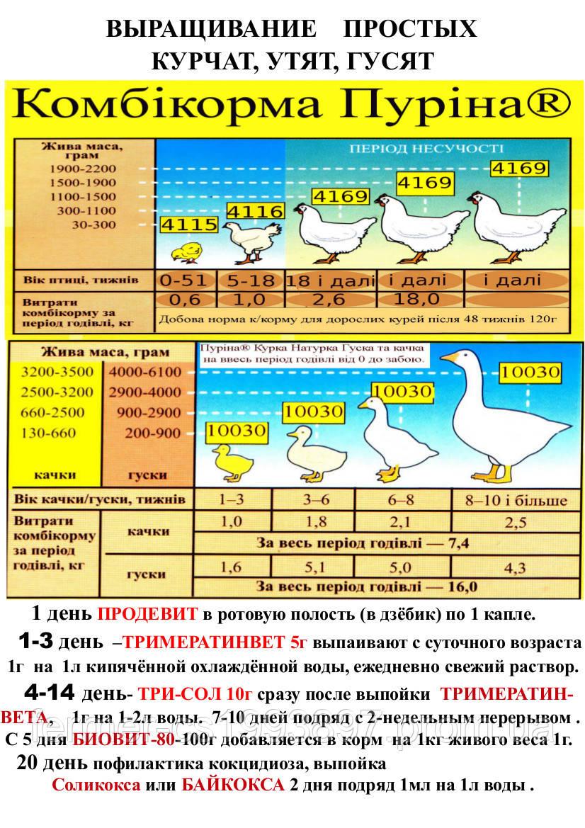 175845293839b8 Пуріна® Курка Натурка Стартер 10001 (Ціна в прайсі), цена 430 грн./мешок,  купить в Запорожье — Prom.ua (ID#120677568)
