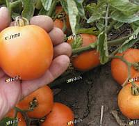 ОРАНЖ - томат детерминантный, Semo