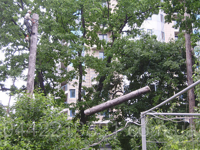 Спил деревьев частями (067) 409 30 70