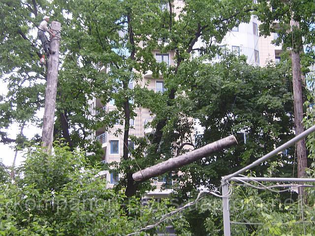 Спилювання дерев частинами (067) 409 30 70
