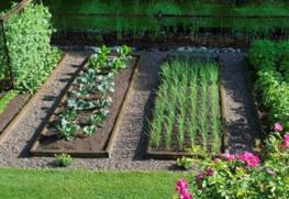Севооборот овощных культур: что, после чего сажать в огороде?
