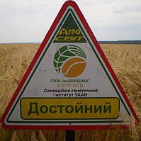 Достойный - Семена ячменя озимого от производителя Элитгосп им. Шевченко