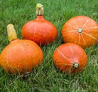 Хакайдо Оранжевый семена тыквы  200 г