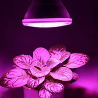 Лампа PAR38 с цоколем Е27 для подсветки растений Bioledex GoLeaf 10Вт красно-синего спектра, IP55