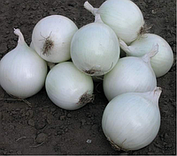 КОМЕТА F1 - семена лука репчатого белого 100 000 семян, Nunhems