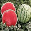 БОСТОН F1 - семена арбуза бессемянного 1 000 семян, Nunhems