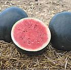 РЕД СТАР F1 - насіння кавуна тип Шуга Бебі 1 000 насінин, Nunhems