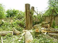 Срезание деревьев (067) 409 30 70, фото 1