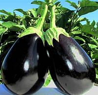 ТІРРЕНІ F1 - насіння баклажана, 1 000 насінин, Bayer