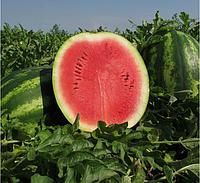АРТИСТ F1 - насіння кавуна тип Крімсон Світ, 1 000 насінин, Bayer