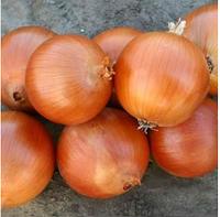 ВАЛЕРО F1 - семена лука репчатого, 100 000 семян, Bayer Nunhems