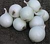 КОМЕТА F1 - семена лука репчатого белого, 100 000 семян, Bayer Nunhems