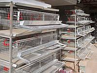 Перепелиная клетка КПН- 40(цена за этаж в комплекте)