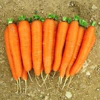 РОМАНС F1 - насіння моркви Нантес (1,6-1,8) 100 000 насінин, Nunhems
