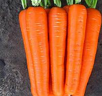 ЛАГУНА F1 - насіння моркви Нантес (1,6-1,8) 25 000 насінин, Nunhems