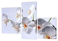 Модульная картина 176 Орхидея белая
