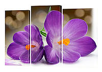 Модульная картина 205 Цветы