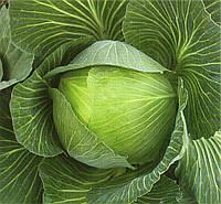 ЧИРЗ F1 - семена капусты, Takii Seeds