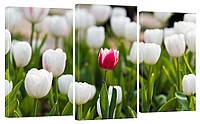 Модульная картина 314 тюльпаны