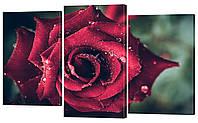 Модульная картина 341 роза
